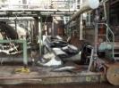 Geschnittene  Stahlstücke  sind fertig zum Abtransport.